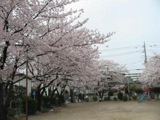 桜web.jpg